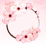 Spring background with pink blossom flowers. Vector 3d illustration. Beautiful vernal floral banner, poster, flyer. Springtime blooming apple tree. close up of Royalty Free Stock Image