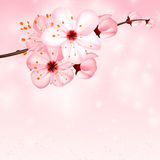 Spring background with pink blossom flowers. Vector 3d illustration. Beautiful vernal floral banner, poster, flyer. Springtime blooming apple tree. close up of Stock Photography