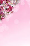Spring background in pink color Royalty Free Stock Image
