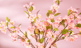 Spring background with pink flowers Royalty Free Stock Photos