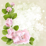 Spring background. With pink roses,  illustration Royalty Free Stock Image