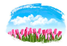 Spring background with pink tulips. Stock Photography