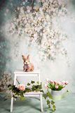 Spring background with pink and white flowers, romantic style royalty free stock photo