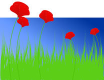 Spring background with poppies Royalty Free Stock Photography