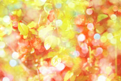 Spring background with red flowers of barberry Stock Images