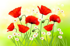 Spring background with red poppy and daisy Royalty Free Stock Image