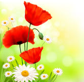 Spring background with red poppy and daisy Stock Images