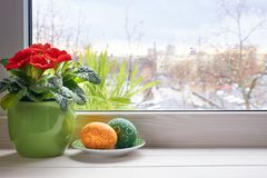 Spring background with red primrose flowers in pot and Easter eg Stock Image