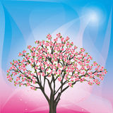 Spring background with sakura blossom - japanese c Stock Photo