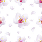 Spring background seamless pattern with sakura blossom vector illustration