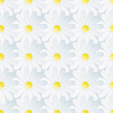 Spring background seamless pattern with white chamomile Royalty Free Stock Photography