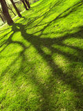 Spring background with shadow of tree Royalty Free Stock Image