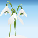 Spring background with snowdrop Stock Image
