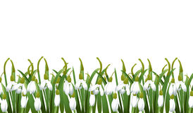 Spring background with snowdrop flowers, green grass. Can be used for Easter, birthday, wedding, anniversary, 8 march, woman`s day. Seasonal sales. Vector vector illustration