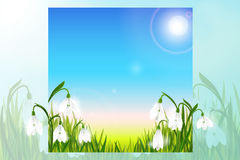 Spring background with snowdrop flowers, green grass, swallows and blue sky. Stock Photos