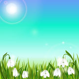 Spring background with snowdrop flowers, green grass, swallows and blue sky. Stock Photo