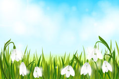 Spring background with snowdrop flowers, green grass, swallows and blue sky. Stock Photography