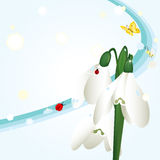 Spring background with snowdrops Royalty Free Stock Photos