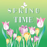 Spring background with snowdrops Royalty Free Stock Images