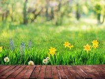 A spring background Stock Photos
