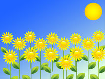 Spring background with sunflowers Stock Photo