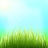 Spring background. Sunny day. Young grass. Royalty Free Stock Photography
