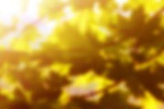 Spring background with sunshine Royalty Free Stock Image