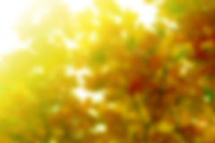 Spring background with sunshine Stock Image