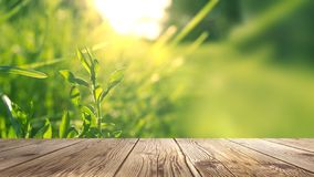 Spring background table. Green washed bokeh background. Wooden table. Spring saver royalty free stock photo