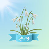 Spring background template with snowdrop flowers. Royalty Free Stock Photos