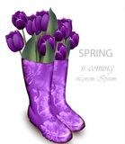 Spring background with Tulip flowers violet color and floral boots. Vector realistic illustrations stock illustration