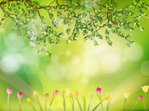 Spring background with tulips. EPS 10 stock illustration