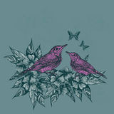Spring background with two pink birds and butterflies, hand-draw Royalty Free Stock Images