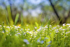 Spring background Stock Image