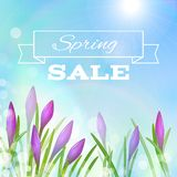 Spring Background with Violet Flowers. Stock Photography