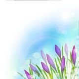 Spring Background with Violet Flowers. Royalty Free Stock Images