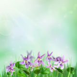 Spring background with violets stock images