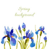 Spring background. Watercolor lowers. Stock Image
