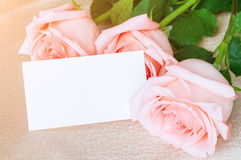 Spring background - white card near peach roses Royalty Free Stock Photo