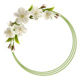 Spring background with white cherry flowers Stock Images