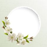Spring background with white cherry flowers Royalty Free Stock Photography