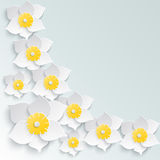 Spring background with white daffodils volume in the corner. Place for your text. Stock Images
