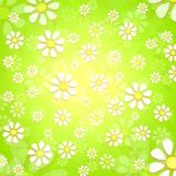 Spring white flowers over green background Stock Images