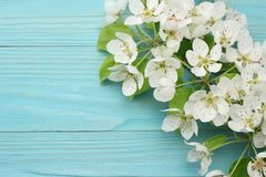 Spring background with white flowers blossoms on blue wooden background. top view royalty free stock photos