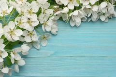 Spring background with white flowers blossoms on blue wooden background. top view stock images