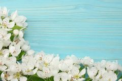 Spring background with white flowers blossoms on blue wooden background. top view Stock Image