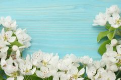 Spring background with white flowers blossoms on blue wooden background. top view Royalty Free Stock Images