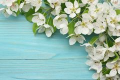 Spring background with white flowers blossoms on blue wooden background. top view stock photo