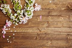 Spring background with wooden board and flowers. And twigs stock photo