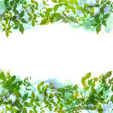 Spring background, wreath with green leaves, watercolor. banner for text. Vector Stock Photo